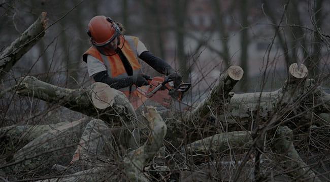 Princeton Tree Service